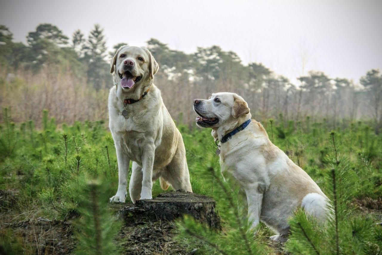 Hunde in der Heide